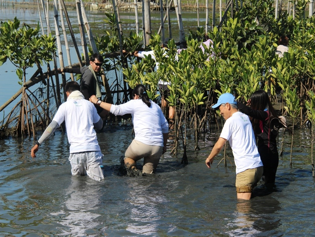 SMCC Philippines, Inc. Mangrove Tree Planting | SMCC